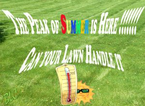 The Peak of Summer Heat is Here — Can your lawn handle it.