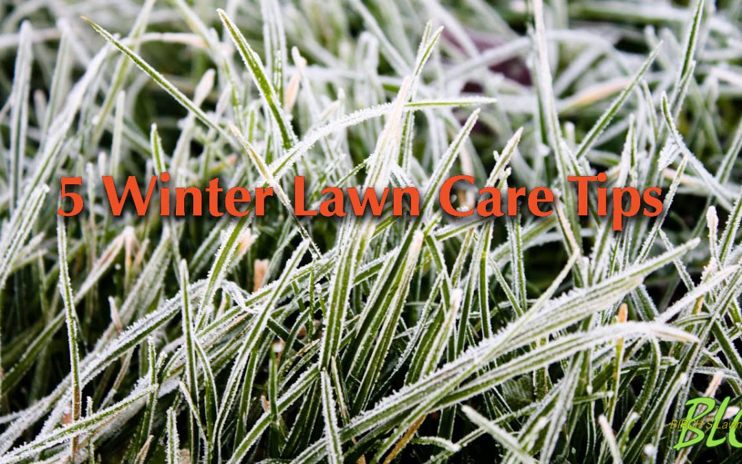 5 Winter Tips for your lawn