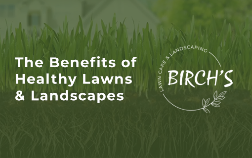 birch's lawn care infographic: benefits of a healthy lawn and healthy landscaping